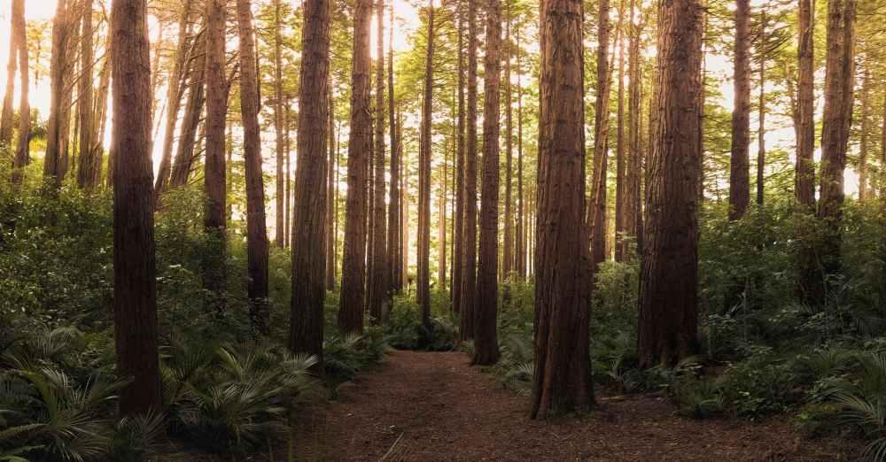 conifer daylight environment evergreen